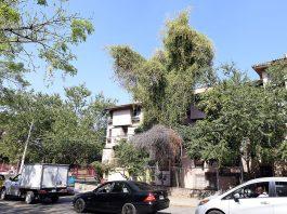 Censo de árboles enfermos y muertos en Distrito Huentitán