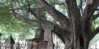 Árbol del Vampiro del Panteón del Belén. Fotografía: Iván Serrano Jauregui
