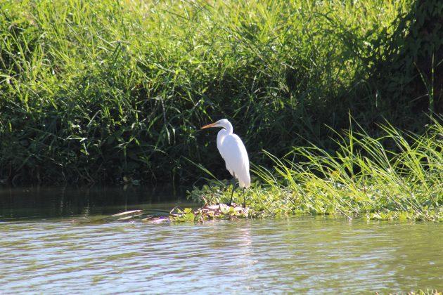 Aves del Lago de Chapala. Fotografía: Iván Serrano Jauregui