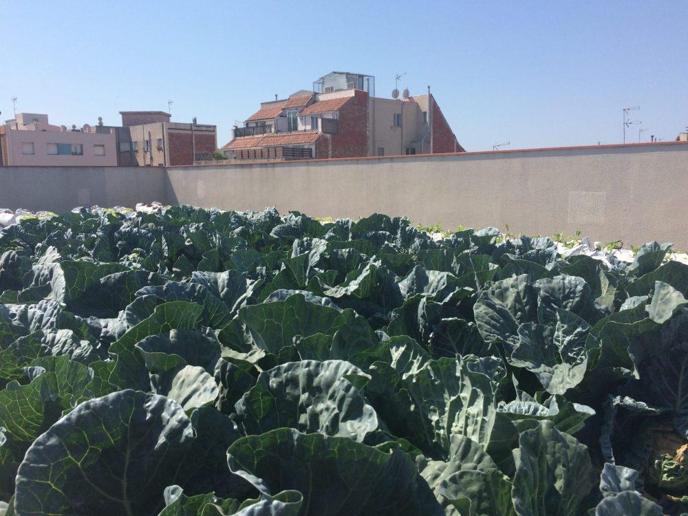 Agricultura urbana, en el edificio en Barcelona El Instituto Municipal de Personas con Discapacidad, en Barcelona, España. Fotografía: Perla Zambrano